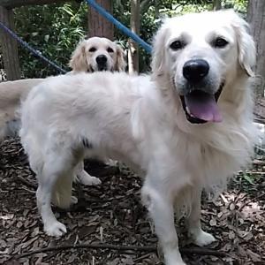 イギリスの犬とアメリカの犬!