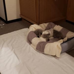 ミュウちゃんとお泊まりをして楽な点は、