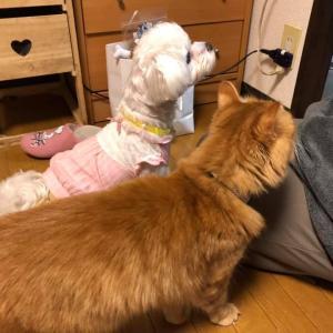 ネコの飼い主にしかわからないネコのツボ!