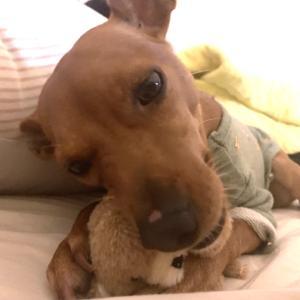 捨て犬あさりちゃん、初めての病院
