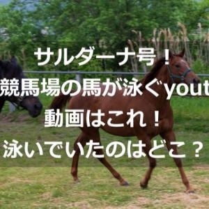 サルダーナ号!大井競馬場の馬が泳ぐyoutube動画はこれ!泳いでいたのはどこ?