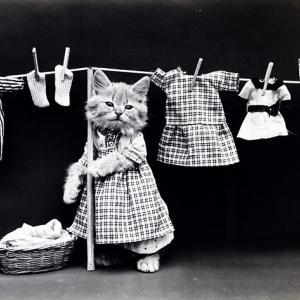洗濯機が荒れ狂ったので原因を考えてみた