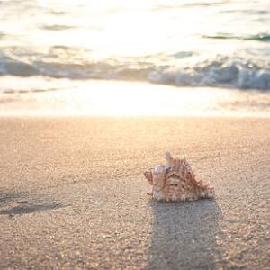 まるで南国のビーチ 伊豆多々戸浜の海鮮、宿泊施設