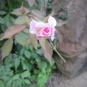 散歩の途中で見つけた夏の花々