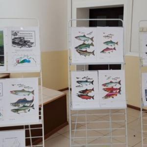 鮭の研究本が発行されます