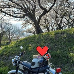 お花見タンデム【仙台市】
