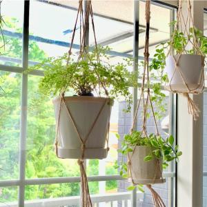 【Green Life】観葉植物のハンギングって楽しいじゃん。