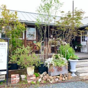 【知立市】小さめだけれどお洒落な植物屋さん『WALDEN GREEN SHOP(ウォールデングリーンショップ)』