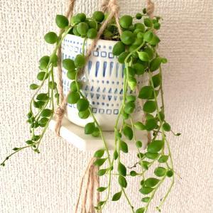 【Green Life】ぷにぷにとした葉っぱが特徴的な『グリーンネックレス』の育て方