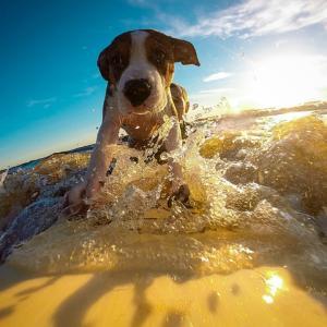 イヌを熱中症から守ろう。油断していると怖い夏の猛暑対策