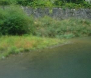 土砂降りの川治温泉でフライフィッシング 鬼鱒・スーパーヤマメ・19インチレインボー 10月4日