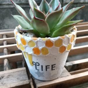 鉢Life。