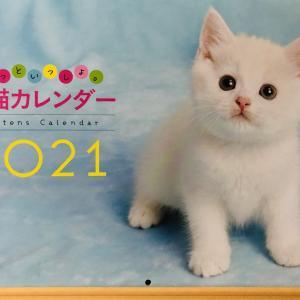 2021年のカレンダー、月曜始まりの猫のカレンダーです。