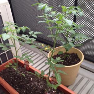 初心者でも大丈夫!家庭菜園を簡単に始める方法とおすすめをご紹介!
