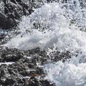 千葉県いすみ市で波の伊八の彫刻を見るなら飯縄寺!アクセスと見どころ