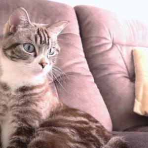 サンシャイン池崎家の猫用月と宇宙船のキャットウォークの販売店は?どこで買える?