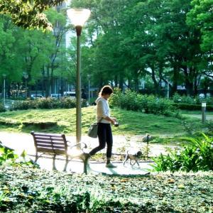 散歩をすると幸福に⁉心と体が喜ぶ散歩の正しい歩き方と効果