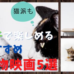 【犬派も猫派も】親子で楽しめるおすすめ動物映画5選【Amazonプライム】