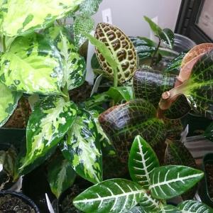 冬の室内ジャングル