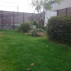 病の芝庭と着生蘭