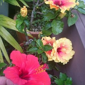写真撮っただけ(笑) 植物たち