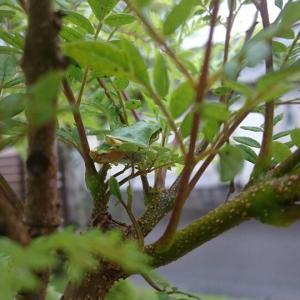 バンダ雨ざらしメソッド  カエル芝庭に住まう