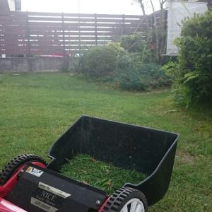 雨待ち芝庭 芝刈り  パキラも