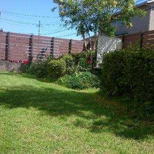 秋のティフトン芝庭と施肥  ビカクをポチり