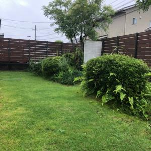 土砂降りの芝庭 砂入れのあと