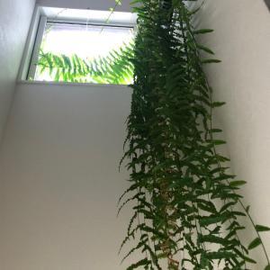植物たち 空に向かって 明るい方へ