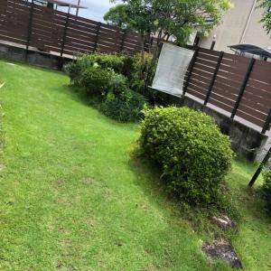 芝庭とジャカランダ
