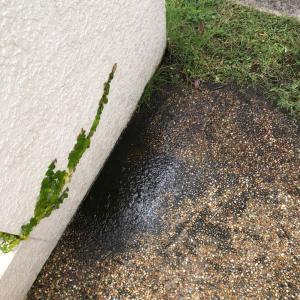 芝庭と高圧洗浄