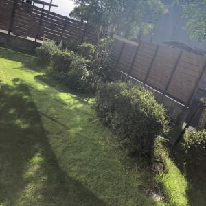 台風過ぎて芝刈り バデモア出動