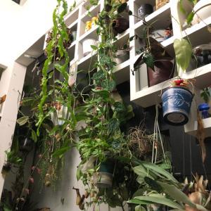 垂れ下がりの絡み合いの植物