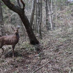 カーブの先で「鹿っ!」突然の動物には毎回焦る。