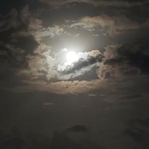 昨日の満月綺麗でしたねー( 〃▽〃)