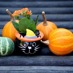 ハロウィンの装飾でお部屋をアレンジ!子供も喜ぶ最新グッズで手作りハロウィンパーティ!