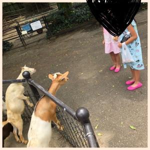 お盆休みの休日 動物園へ!