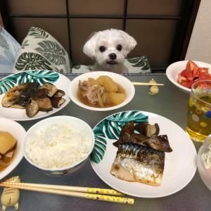豪華盛りだくさん!和食の夕食!