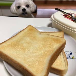 3日連続トーストの朝食!
