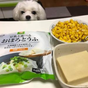 おぼろ豆腐と高野豆腐