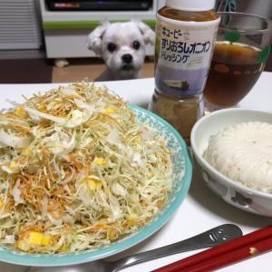 キャベツとお豆腐