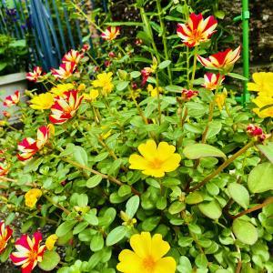 夏の庭の訪問者、そして反省。