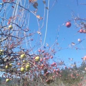 りんご狩り🍎