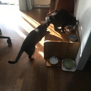 にゃんこ お日さまの中の朝ご飯