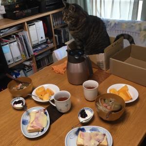 にゃんこ 朝の食卓にゃ