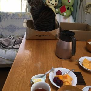 にゃんこ 食卓の秋
