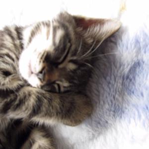 にゃんこ かわいい猫の写真あったっけ?