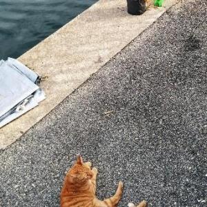 「今日は大漁の予感がするにゃ!」ぬっこくんの日常24
