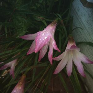悲しい時にお花を見つめると、お花さんも悲しんでくれてるように、感じるのは何故